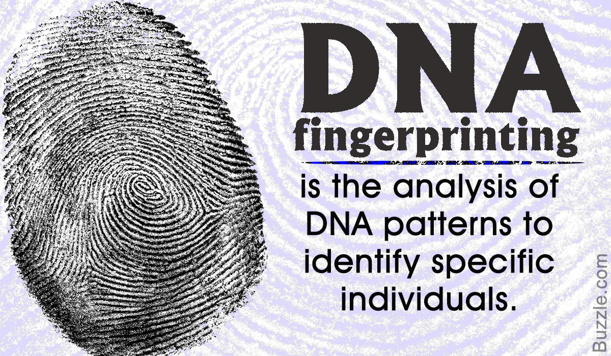 DNA fingerprinting - post by  ROHIT GUY
